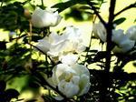 цветы из бисера - бисероплетение - noname.