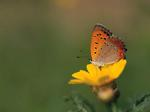Desktop wallpapers - Animals - Insects Insects