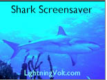 Shark Screensaver v2001.10